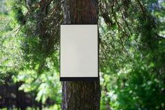 Ambiente, concepto de la naturaleza - bosque, tablero en blanco Imagen de archivo libre de regalías