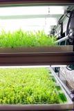 Ambiente controllato idroponico Fotografia Stock Libera da Diritti