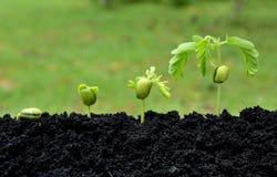 Ambiente de la agricultura en concepto cada vez mayor del paso de la naturaleza imagen de archivo libre de regalías