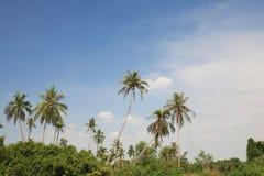 Ambiente de la palmera contra el cielo azul Foto de archivo