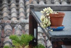 Ambiente de las terrazas de Cagliari Fotografía de archivo libre de regalías