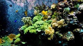 Ambiente del mar del submarino del océano con un pescado amarillo del sabor en un acuario marino metrajes