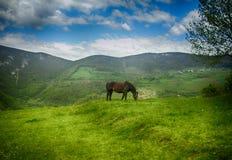 ambiente do mountaine Imagens de Stock
