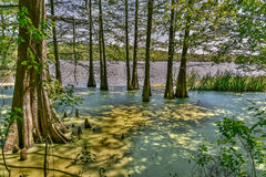 Ambiente do pântano Imagens de Stock