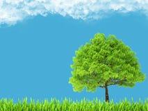 Ambiente ed albero verdi su cielo blu Fotografia Stock