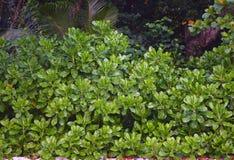 Ambiente enorme de la tierra verde del verdor todo alrededor - hojas del verde de la planta costera - fotografía de archivo libre de regalías