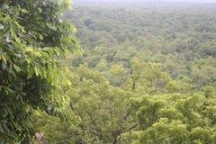 Ambiente naturale Fotografia Stock Libera da Diritti