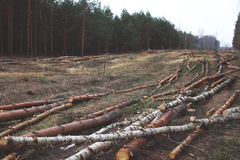Ambiente, natureza e conceito da floresta do desflorestamento Fotografia de Stock Royalty Free