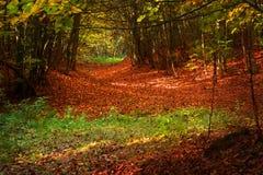 Ambiente outonal da floresta fotografia de stock