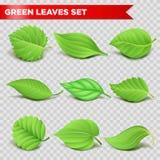 Ambiente relaistic verde do eco dos ícones da folha 3d ou bio símbolos do vetor da ecologia Imagens de Stock Royalty Free