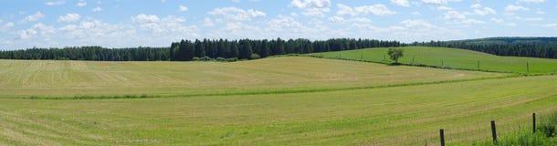 Ambiente rurale di panorama del paese del campo di verde dell'azienda agricola del paesaggio di agricoltura Fotografia Stock