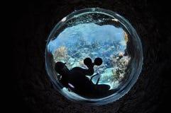 Ambiente subaquático fotografia de stock royalty free