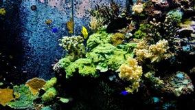 Ambiente subaquático do mar do oceano com um peixe amarelo da espiga em um aquário marinho filme