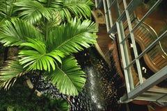 Ambiente tropical Imagen de archivo