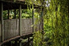 Ambiente tropical fotos de stock