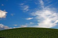 Ambiente verde Immagine Stock Libera da Diritti