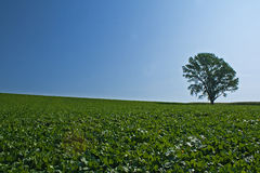 Ambiente verde Immagini Stock