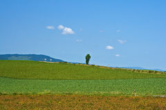Ambiente verde Fotografie Stock