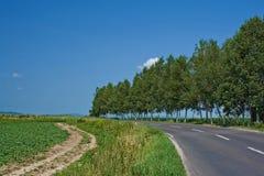 Ambiente verde Immagini Stock Libere da Diritti