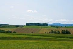 Ambiente verde Fotografie Stock Libere da Diritti