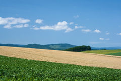 Ambiente verde Fotografia Stock