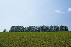 Ambiente verde Fotografia Stock Libera da Diritti