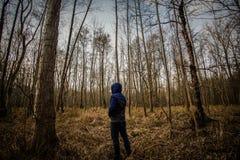 Ambientes del bosque Foto de archivo