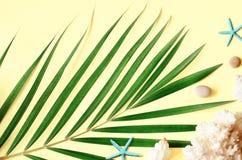 Ambientes del verano Hoja de palma, conchas marinas y estrellas de mar tropicales Endecha plana, visi?n superior imagen de archivo