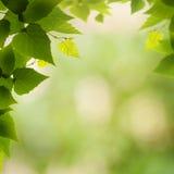 Ambiti di provenienza ambientali astratti Fotografia Stock