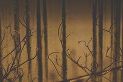 Ambiti di provenienza asciutti astratti dei rami di albero Fotografia Stock