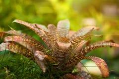 Ambiti di provenienza astratti delle piante tropicali Fotografia Stock Libera da Diritti
