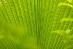 Ambiti di provenienza astratti delle piante tropicali Fotografia Stock