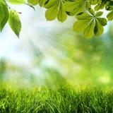 Ambiti di provenienza astratti di estate e della primavera Fotografia Stock Libera da Diritti