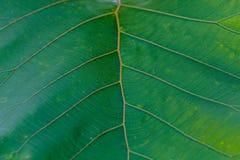 Ambiti di provenienza astratti, gambi della foglia con verde Immagine Stock