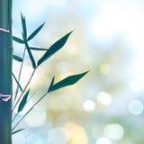 Ambiti di provenienza astratti orientali con erba di bambù Fotografia Stock Libera da Diritti