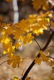 Ambiti di provenienza di autunno Foglie e fogliame Immagine Stock Libera da Diritti