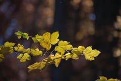 Ambiti di provenienza di autunno Foglie e fogliame Fotografia Stock Libera da Diritti
