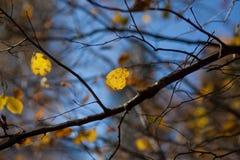 Ambiti di provenienza di autunno Foglie e fogliame Immagini Stock Libere da Diritti
