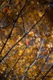 Ambiti di provenienza di autunno Foglie e fogliame Fotografie Stock