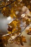 Ambiti di provenienza di autunno Foglie e fogliame Immagine Stock
