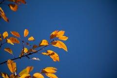 Ambiti di provenienza di autunno Foglie e fogliame Immagini Stock