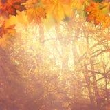 Ambiti di provenienza d'autunno astratti Fotografia Stock