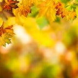 Ambiti di provenienza d'autunno astratti Fotografia Stock Libera da Diritti