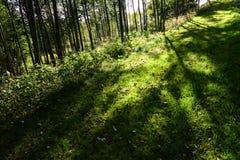 Ambiti di provenienza degli alberi Fotografia Stock