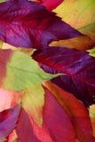 Ambiti di provenienza dei fogli di autunno Fotografie Stock Libere da Diritti