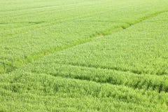 Ambiti di provenienza del campo di erba verde veduti da sopra Immagini Stock