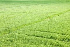 Ambiti di provenienza del campo di erba verde veduti da sopra - la copia del briciolo di immagine Fotografie Stock