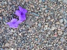 Ambiti di provenienza del fiore Fotografia Stock