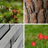 Ambiti di provenienza del giardino Fotografie Stock Libere da Diritti
