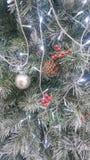 Ambiti di provenienza dell'albero di Natale fotografia stock